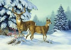 Winter Buck and Doe Linda Picken Art Wildlife Paintings, Wildlife Art, Animal Paintings, Animal Drawings, Illustration Photo, Illustrations, Deer Art, Moose Art, Deer Drawing