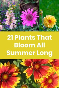 Vegetable Garden, Herb Garden, Lawn And Garden, Growing Flowers, Growing Plants, Planting Flowers, Organic Gardening, Gardening Tips, Container Gardening