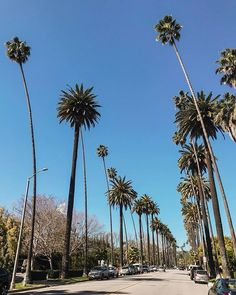 Love the palm trees in Beverly Hills. Palm Trees, Beverly Hills, Fair Grounds, Wanderlust, Mindfulness, Earth, Explore, Beautiful, Instagram Posts