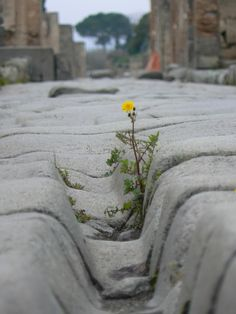 There´s still a chance to rise from the dust, Pompei, Italy