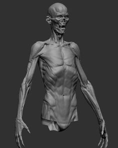 Exceptional Drawing The Human Figure Ideas. Staggering Drawing The Human Figure Ideas. Arm Anatomy, Anatomy Poses, Anatomy Study, Body Anatomy, Zbrush Anatomy, Male Figure Drawing, Figure Drawing Reference, Body Drawing, Anatomy Reference
