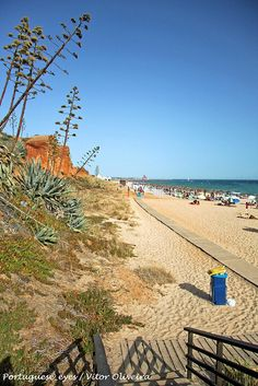 Praia da Rocha #Baixinha Poente - #Portugal/AGAVE ON THE BEACH