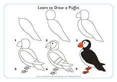 Learn to Draw a Puffin Drawing For Kids, Art For Kids, Bird Template, Bird Applique, Animal Coloring Pages, Bird Pictures, Teaching Art, Learn To Draw, Animal Drawings