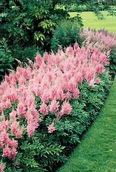 gartenblumen Prachtspiere sommer garten ideen gartenpflanzen