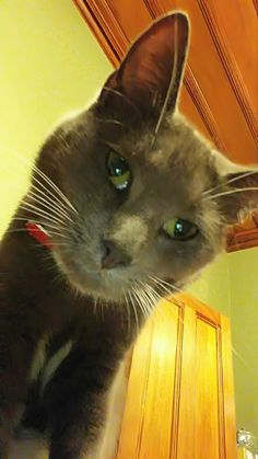 Lilah taking a selfie My People, Take That, Selfie, Cats, Animals, Gatos, Kitty Cats, Animaux, Animal