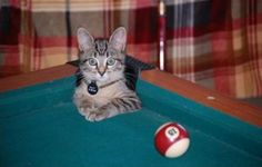 Hairball in Corner Pocket! Sinks, boxes, paper bags, Fedex packages and Ikea are just a few of the many places cats love to curl up and hide – but pool tables? Check out these hysterical pics of pool table putty-cats rounded up by our friend. I Love Cats, Crazy Cats, Cute Cats, Funny Cats, Chocolate Cat, Cat Water Fountain, Play Pool, Rack, Here Kitty Kitty