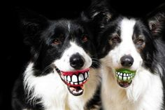"""See your dog """"smile"""" with this treat ball with a toothy grin on it"""