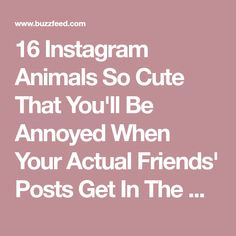16 Instagram Animals So Cute That You'll Be Annoyed When Your Actual Friends' Posts Get In The Way