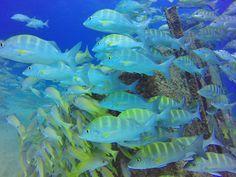 Cabo Pulmo Marine Park - a Conservation Success Story. Read the Blog: http://www.cabovillas.com/blog/?p=4360 #diving #scuba #scubadiving #Baja #BajaSur #BajaCaliforniaSur #SeaofCortez #GulfofCalifornia #Mexico #travel #tourism #ecotravel #ecotourism #snorkeling #wildlife #marinelife #tropicalfish