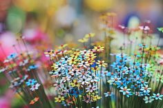 ☂Colorful Artificial Flowers☂