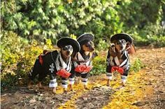 Min Pin Mariachi Band from Beverly Hills Chihuahua 3!!!