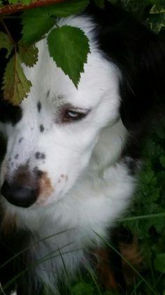 Strider under the berry bushes