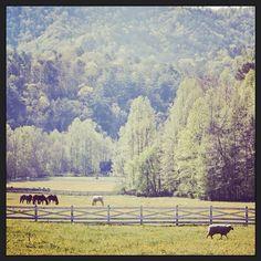 Blackberry Farm: Horses in the Meadow