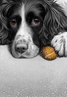 Dogs in Art at the StockBridge Gallery - Bloody Weather by Nigel Hemming, Animal Paintings, Animal Drawings, I Love Dogs, Cute Dogs, Cockerspaniel, English Springer Spaniel, Mundo Animal, Spaniel Dog, Dog Portraits