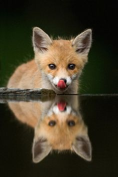I love pictures like this I think they are amazing. Plus that fox is just so adorable. <3