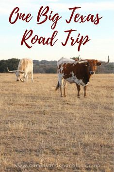 Highways & Byways: The Ultimate Texas Road Trip