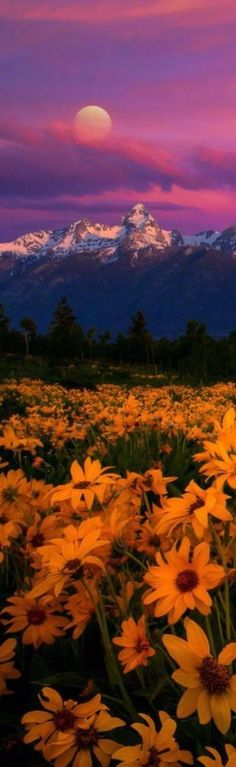 Magical Teton – Amazing Pictures - Amazing Travel Pictures with Maps for All Around the World