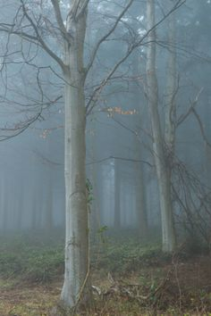 tulipnight: Mysterious Wood by Roger Voller