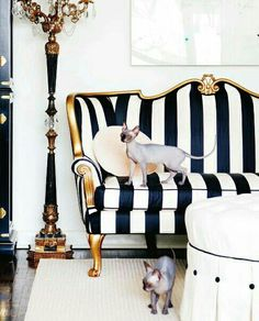 luxurious black & white striped sofa with gold frame Black And White Sofa, Black White Rooms, White Sofas, White Gold, White Chic, Black Couches, White Beige, Eclectic Furniture, Eclectic Decor