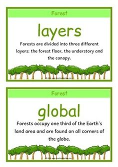 A printable set of 18 A5 fact cards that give fun, interesting and key facts about forest habitats. This set is great for activities, discussions, introducing a new topic and for display boards! Visit our TpT store for more information and for other classroom display resources by clicking on the provided links. Forest School Activities, Enrichment Activities, Social Studies Activities, Science Resources, Science Ideas, Science Lessons, Teacher Hacks, Best Teacher, Vocabulary Word Walls