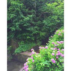 キャプション→鳥のさえずりが響いています #river#green#flower#picture#紫陽花#風景#川#森林#マイナスイオンというか#湿気すごい#熱また出てきそう ユーザー→riiie_322 場所→