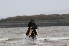 Riding Holiday, Beach Rides, Wild Atlantic Way, Winter Beach, Galway Ireland, Horses For Sale, Horse Riding, Montana, Tours