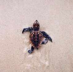 Aww look it's so tiny and it's got a cute shell and cute legs what the heck I want this turtle