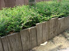 Plank edging - perfect for a woodland spot