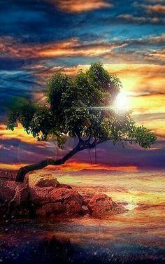 Quando diventi  uno specchio senza pensieri,  tutte le distinzioni  scompaiono dal mondo. Allora la rosa, l'uccello,  la terra, il cielo, il mare,  la sabbia e il sole  sono tutti un'unica cosa,  un'unica energia.  Osho