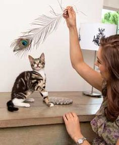 Take the purrfect photograph of your cat.