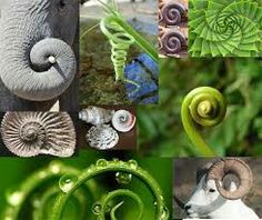 Sacred Geometry. Spiral. Swirl.  Texture.  Found in Nature.  Golden Ratio. Implied Line.