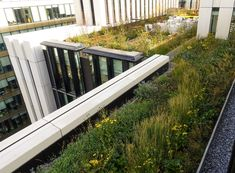 Large GRP planters used to create large planting bed for wild flower garden in Central London. Green Roof Benefits, Roof Terrace Design, London Wall, Large Planters, Architect Design, Landscape Architecture, Wild Flowers, Planting, Rooftop Gardens
