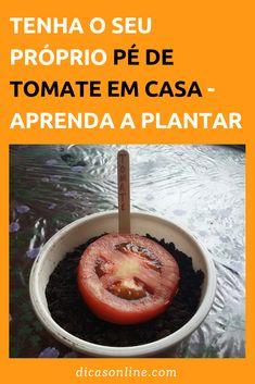 Como Plantar Tomate - Passo a Passo Como Plantar Banana, Home Vegetable Garden, Home And Garden, Concrete Garden, Bonsai, Backyard, Favorite Recipes, Organic, Fruit