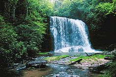 Gorges State Park  »  Welcome!    Address: NC 281 South, P.O. Box 100, Sapphire, NC 28774-0100  GPS coordinates: 35.1133, -82.9563  Office Phone: (828) 966-9099