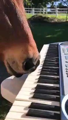 Funny Horses, Cute Horses, Funny Dogs, Cute Dogs, Baby Horses, Funny Animal Jokes, Cute Funny Animals, Funny Animal Videos, Funny Animal Pictures