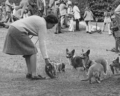 The Queen And Her Corgis... this shall be me with mah corgs!