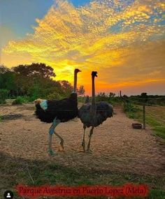 Bolivia, Camel, Animals, Salar De Uyuni, Goals, Parks, Viajes, Watercolor Paintings, Colombia