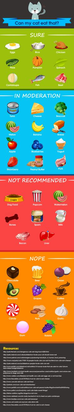 Can my cat eat that? 40 human foods that are safe, dangerous, and some in the…