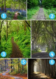 The Path you choose reveals details about your subconscious, and the path you're on. Fun Test: The Path You're Drawn To Tells Your Personality And Fortune Reto Mental, Types Of Pizza, Fun Test, Quiz Me, Forest Path, Personality Quizzes, Infp Personality, Things To Think About, Something About You