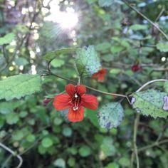 No. 8 Matata - Adaptability. Photograph taken at Koru Pa, near Oakura in Taranaki.