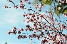 Tissue+Paper+Art+-+Spring+Flowers