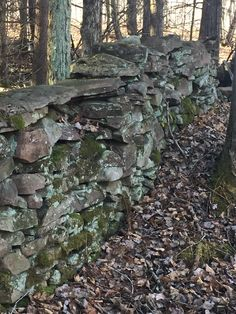 Stone Wall section on my land Florence NY