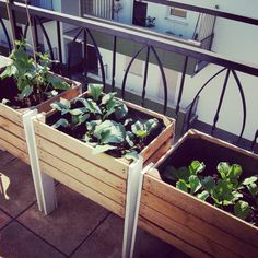 Alte Kiste mit jungem Gemüse - urban gardening