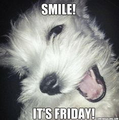 Thank God It's Friday - Dog Edition! Check out all of the Dog meme's about Friday and hating the rest of the week :) #TGIF #MeMe #Dogs #Friday #Funny