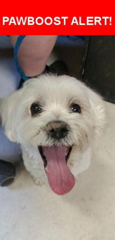 Is this your lost pet? Found in Tampa, FL 33605. Please spread the word so we can find the owner!  White, could be Maltese. Clay County Animal Care & Control needs help sharing this guy. A traveler found him at a rest area on or near Interstate 4 near Tampa. They kept him for a week and now have turned him into Clay County Animal Care and Control, has been checked for microchip but does not have one. This gentleman is well cared for and we are sure someone is heartbroken and missing him…