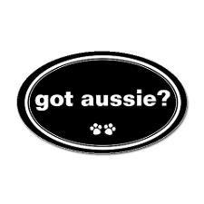 My little Australian Shepard