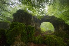 Lotheriel's Elven Realm - forest-nation:   The eye of the forest by Iñaki...