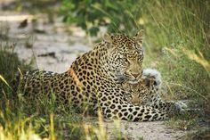 Allow us to be your travel agent for a blissful wildlife safari experience in South Africa. Choose from a range of all-inclusive safari packages priced economically. Sand Game, South Africa Safari, Herd Of Elephants, Kruger National Park, Game Reserve, Big Cats, Wonders Of The World, Habitats, Wildlife