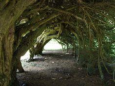 Yew tunnel, Aberglasney Gardens, Wales