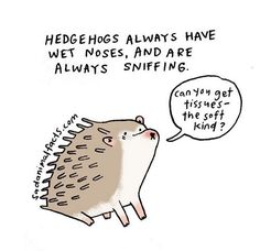 Ive found an animal who can relate to my seasonal allergies. by sadanimalfacts Hamster Treats, Cat Treats, Hedgehog Illustration, Animal Crafts For Kids, Seasonal Allergies, Animal Print Fashion, Animal Facts, Cheer You Up, The More You Know